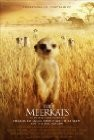 The Meerkats